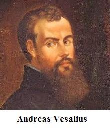 Andreas Vesalius – Anatomist
