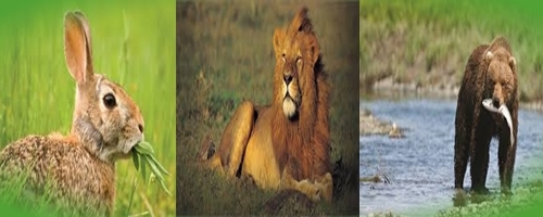 Difference between herbivores carnivores and omnivores difference between herbivores carnivores and omnivores ccuart Choice Image